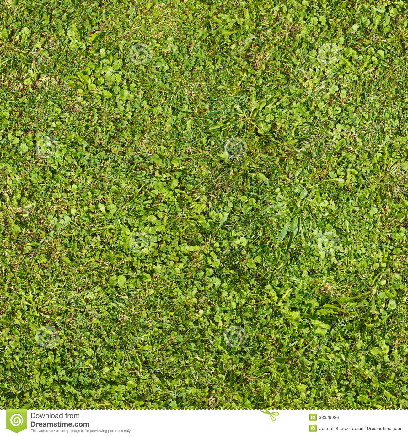 Seamless Green Grass Texture Stock Photo Image Of