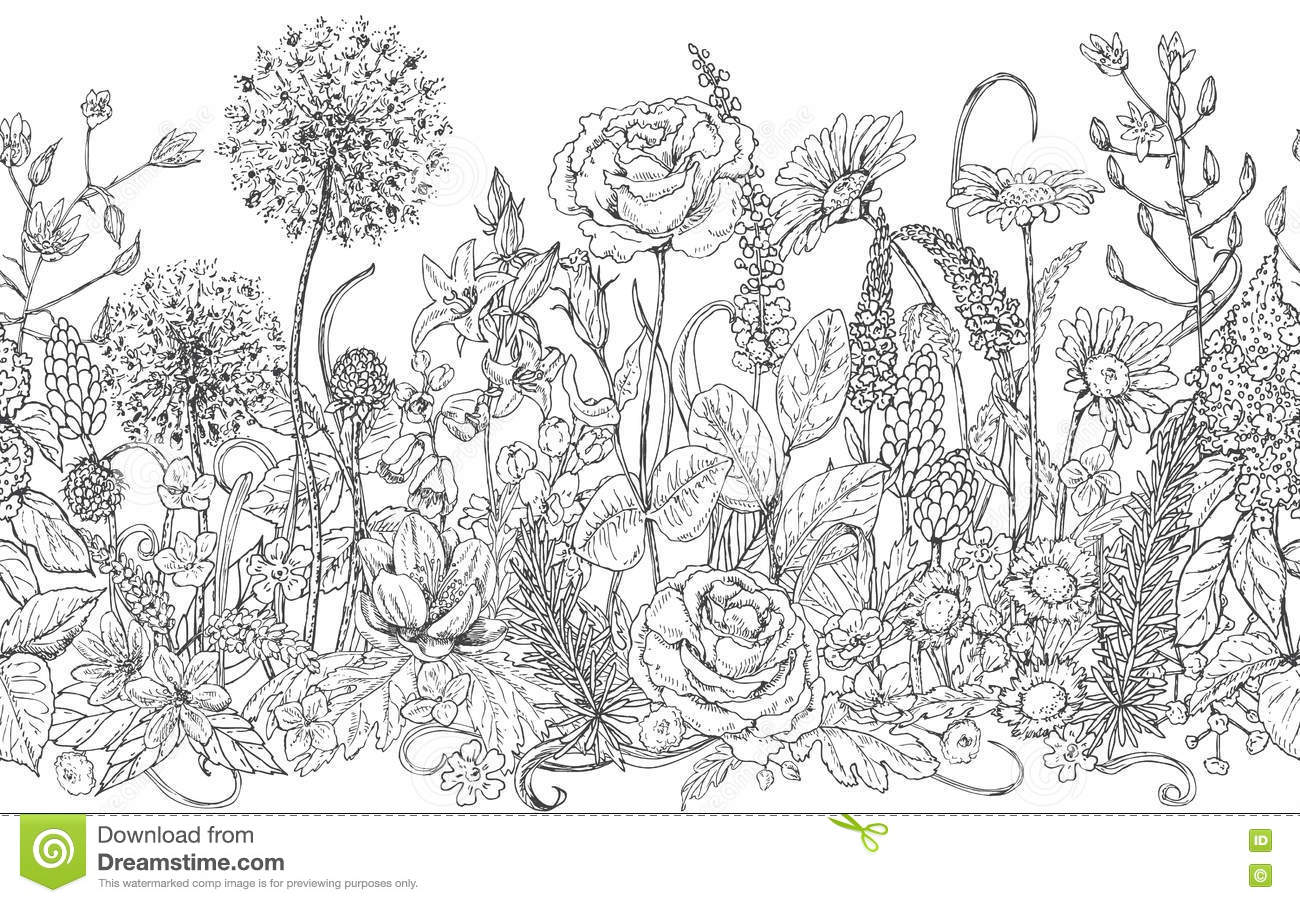 Wildflower Line Drawing : Seamless line pattern with wildflowers stock vector