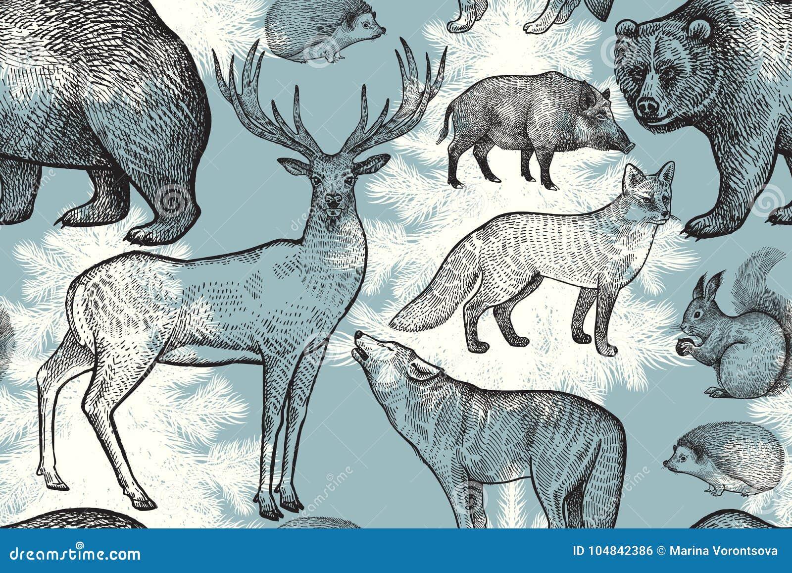 Vector Line Art Animals : Group animals pet shop vector premium download