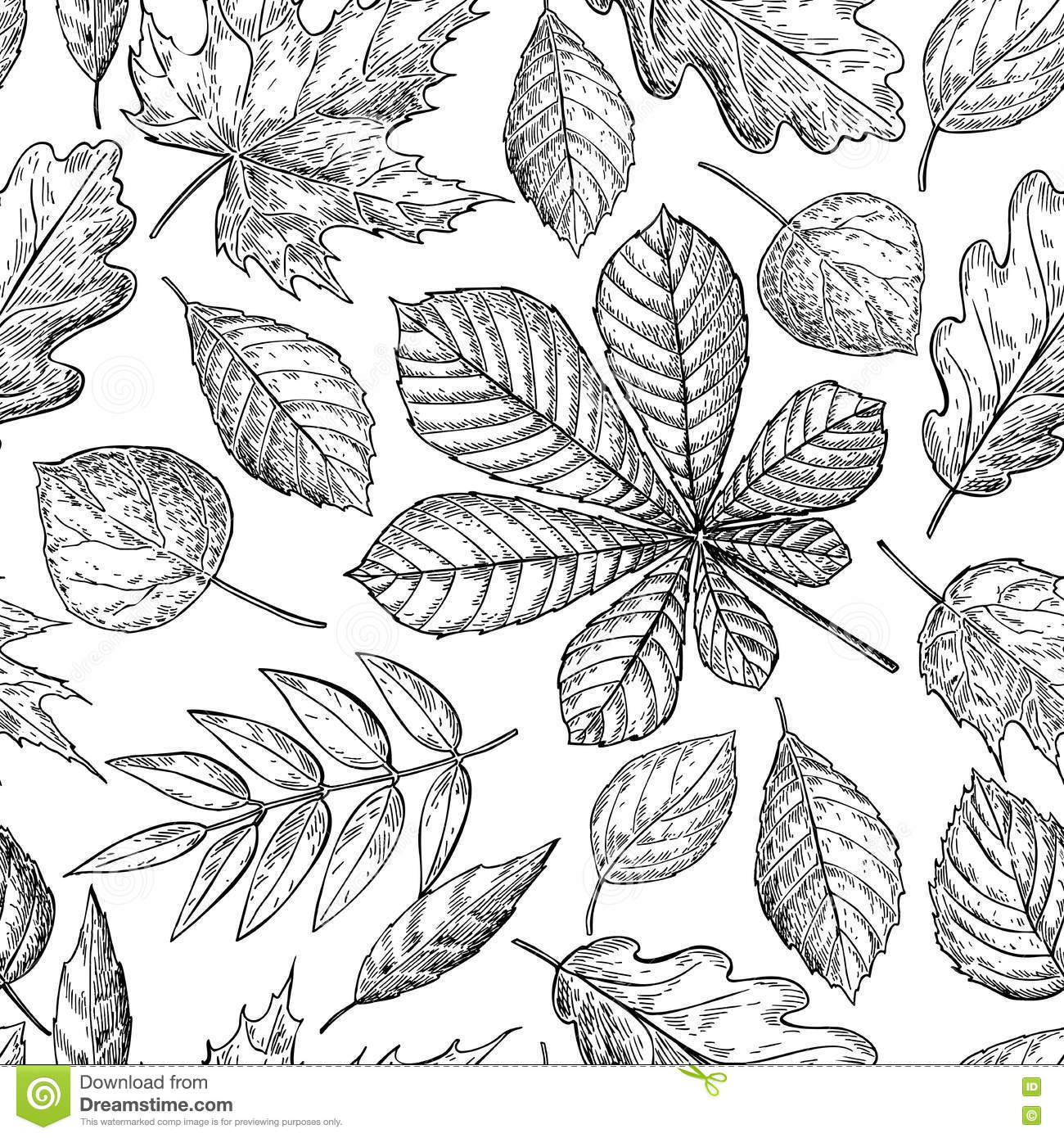 Seamless Pattern With Autumn Leaves. Hand Drawn Detailed Stock ...