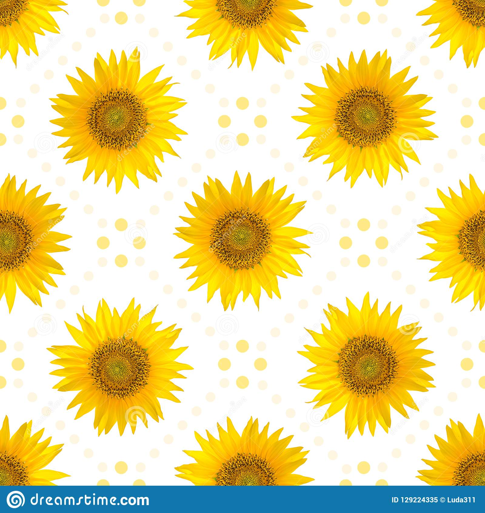 Seamless Sunflowers Pattern White Background Stock Images ...