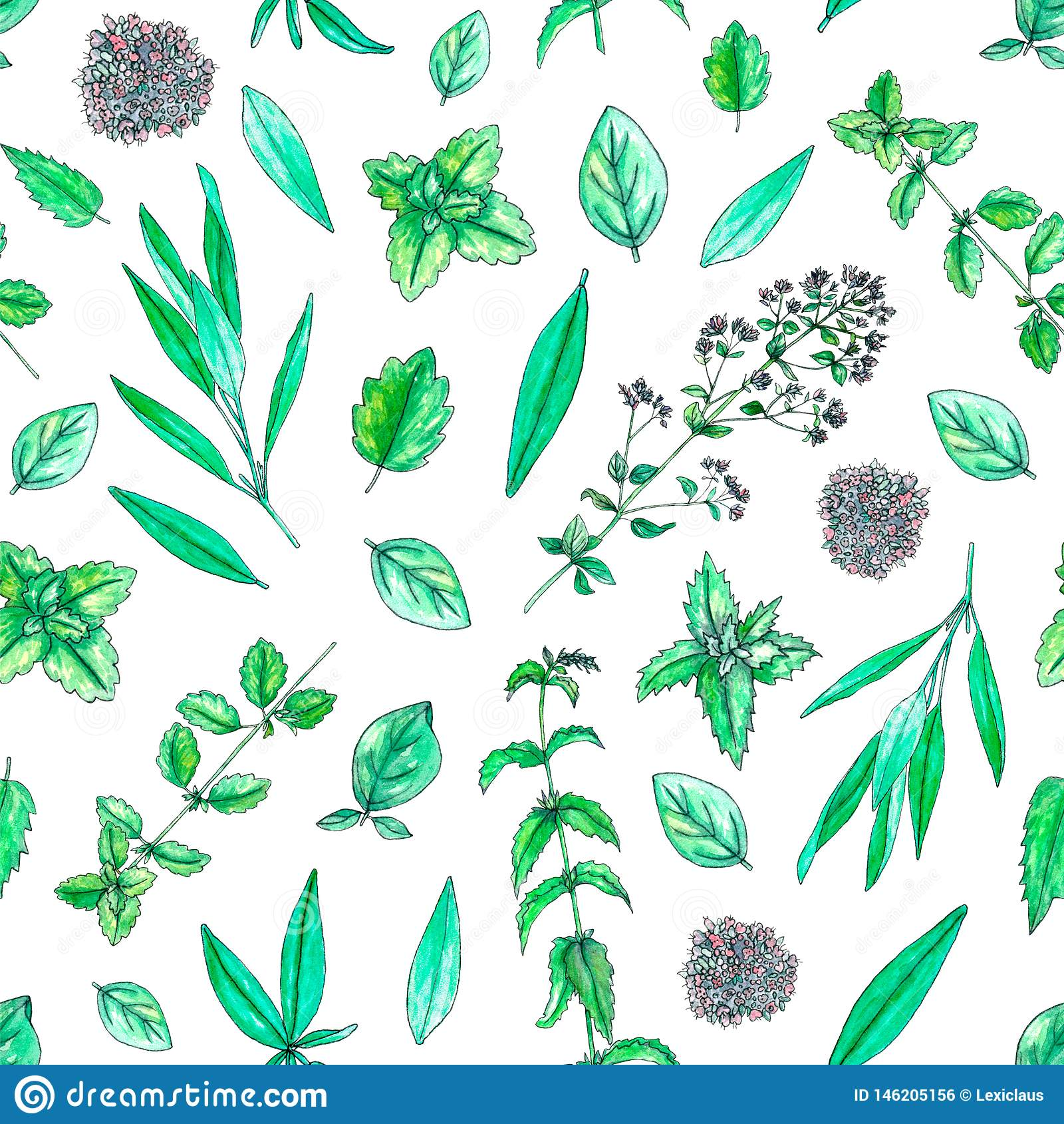 Seamless pattern with hand painted watercolor sage, mint, balm, oregano isolated on white
