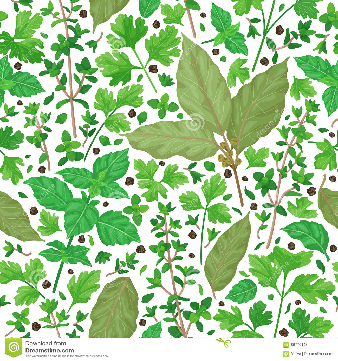 Seamless pattern with herbs stock vector illustration of drawn plant 86770143 - Cook bay leaves ...