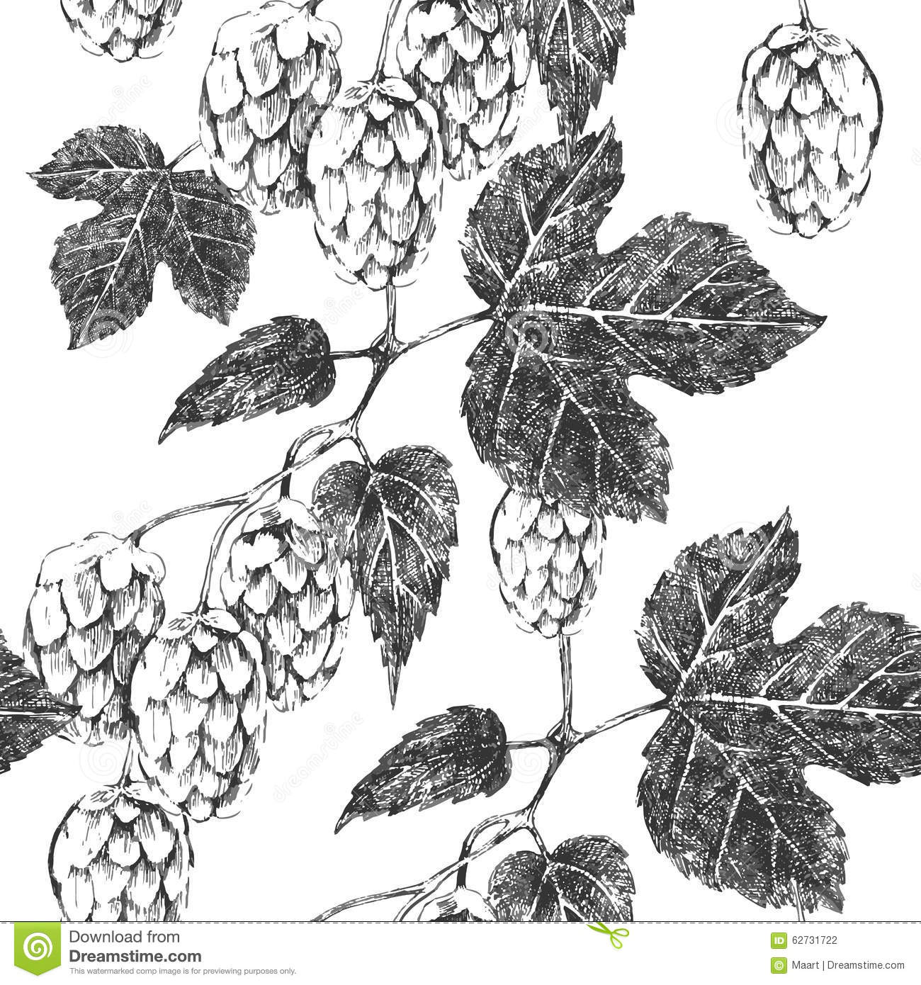 seamless pattern with hop stock vector  image of botanical