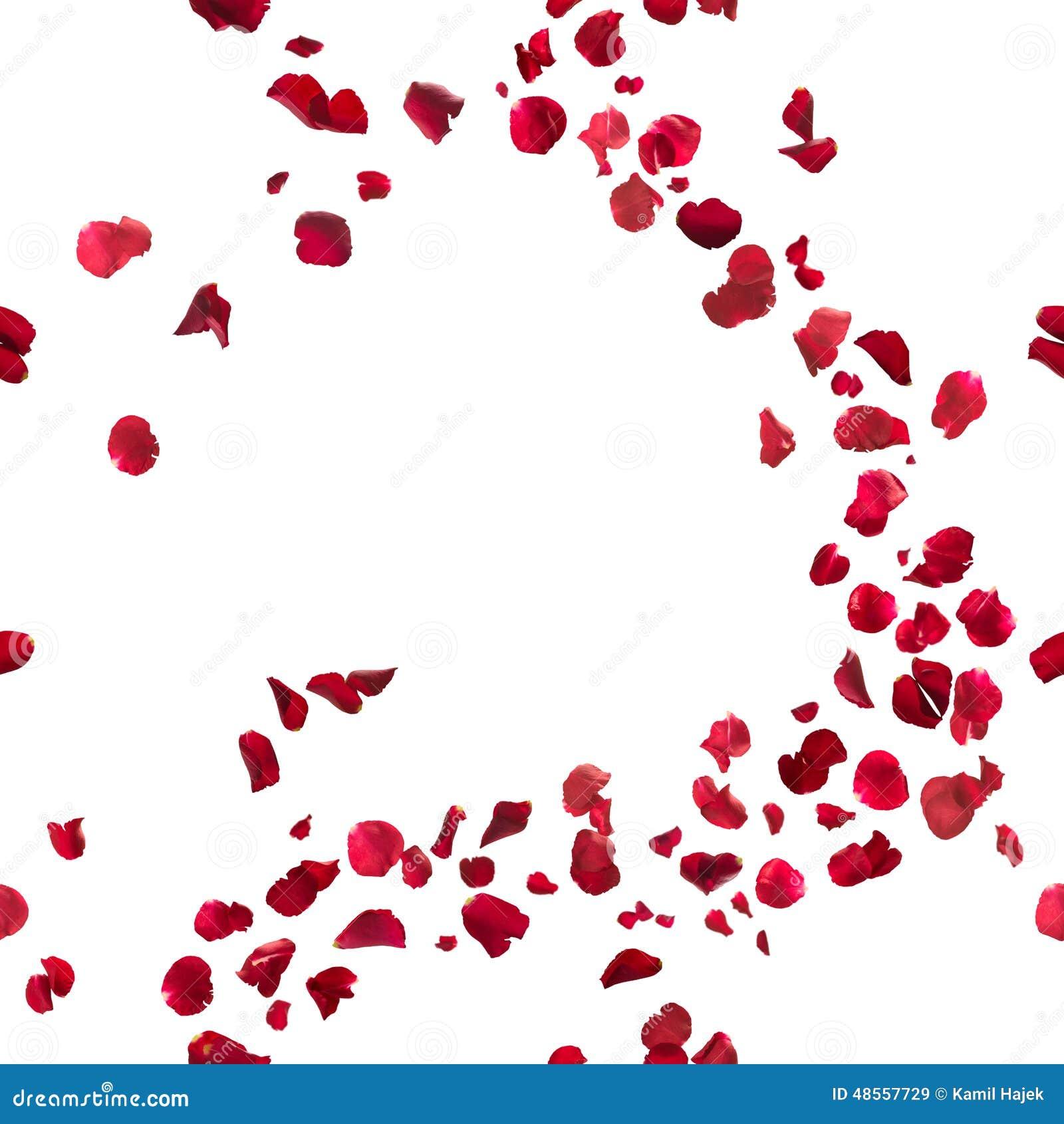 Seamless Red Rose Petals Breeze Stock Photo Image 48557729