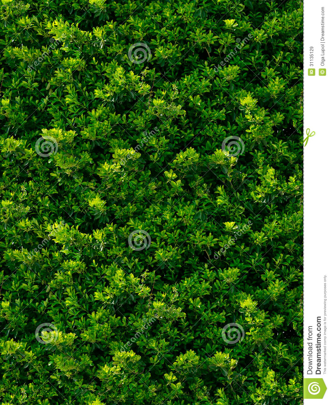 Seamless Texture Of Green Leaves Royalty Free Stock Images ...