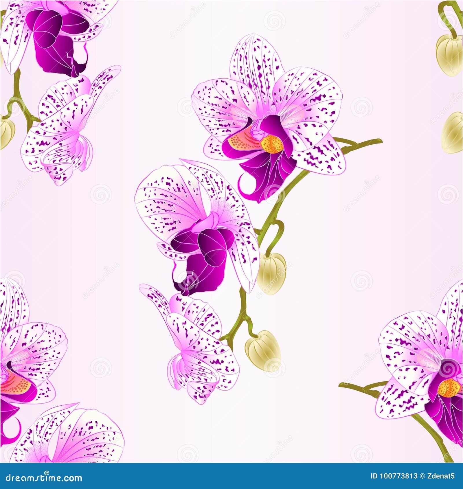 Seamless Texture Purple And White Orchid Stem Phalaenopsis Beautiful
