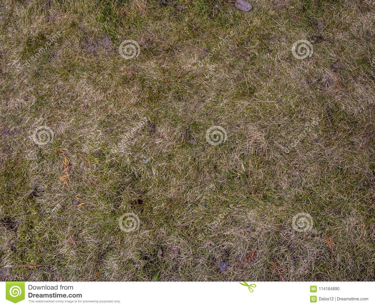 dirt grass texture seamless. Seamless Tileable Texture Of The Ground Covered With Dry Grass. Close Up Theblack And Grass Texture. Dirt Color Soil Background