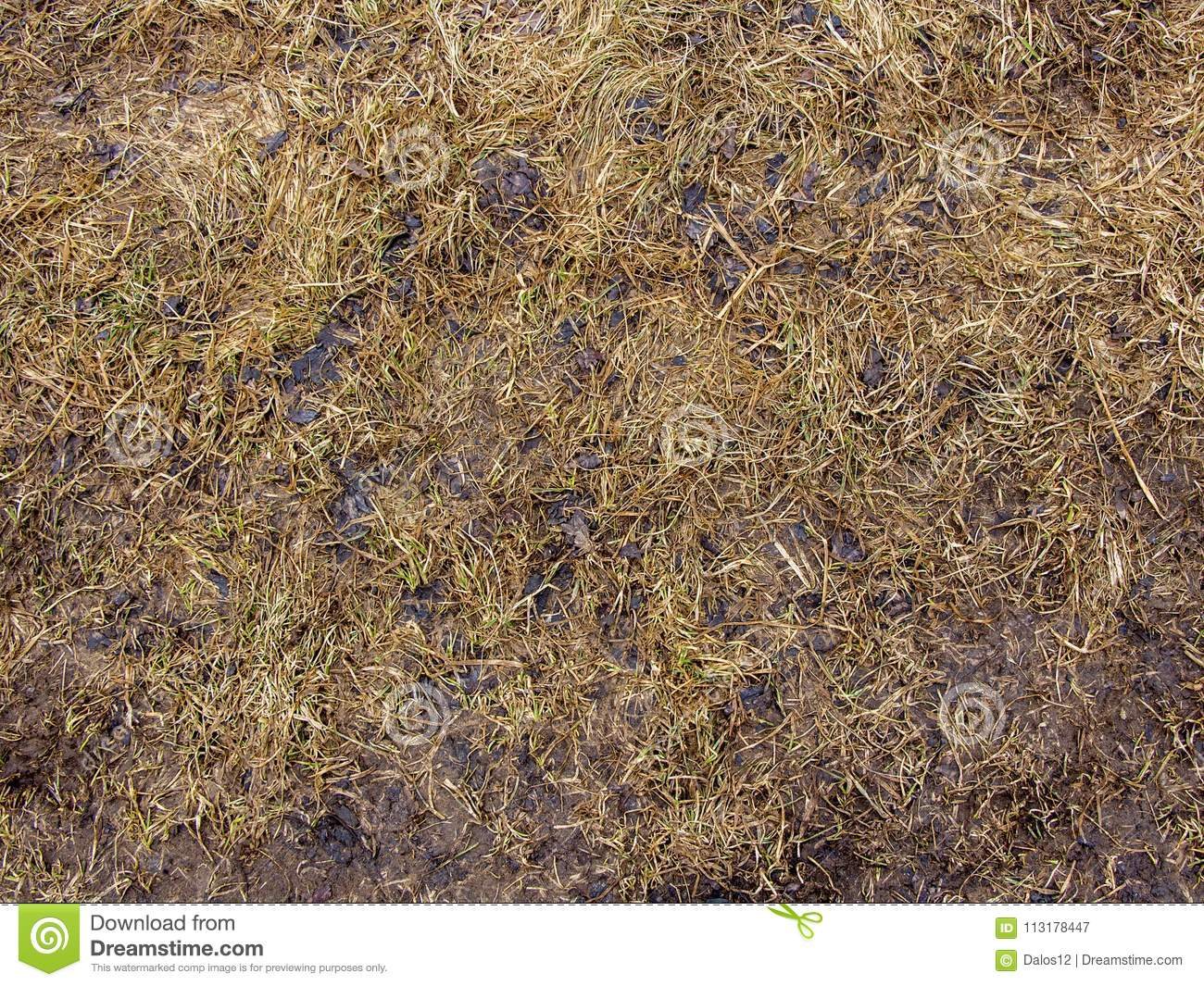 Soil with dried grass background. Seamless Texture of the Ground with Dry Herbs.