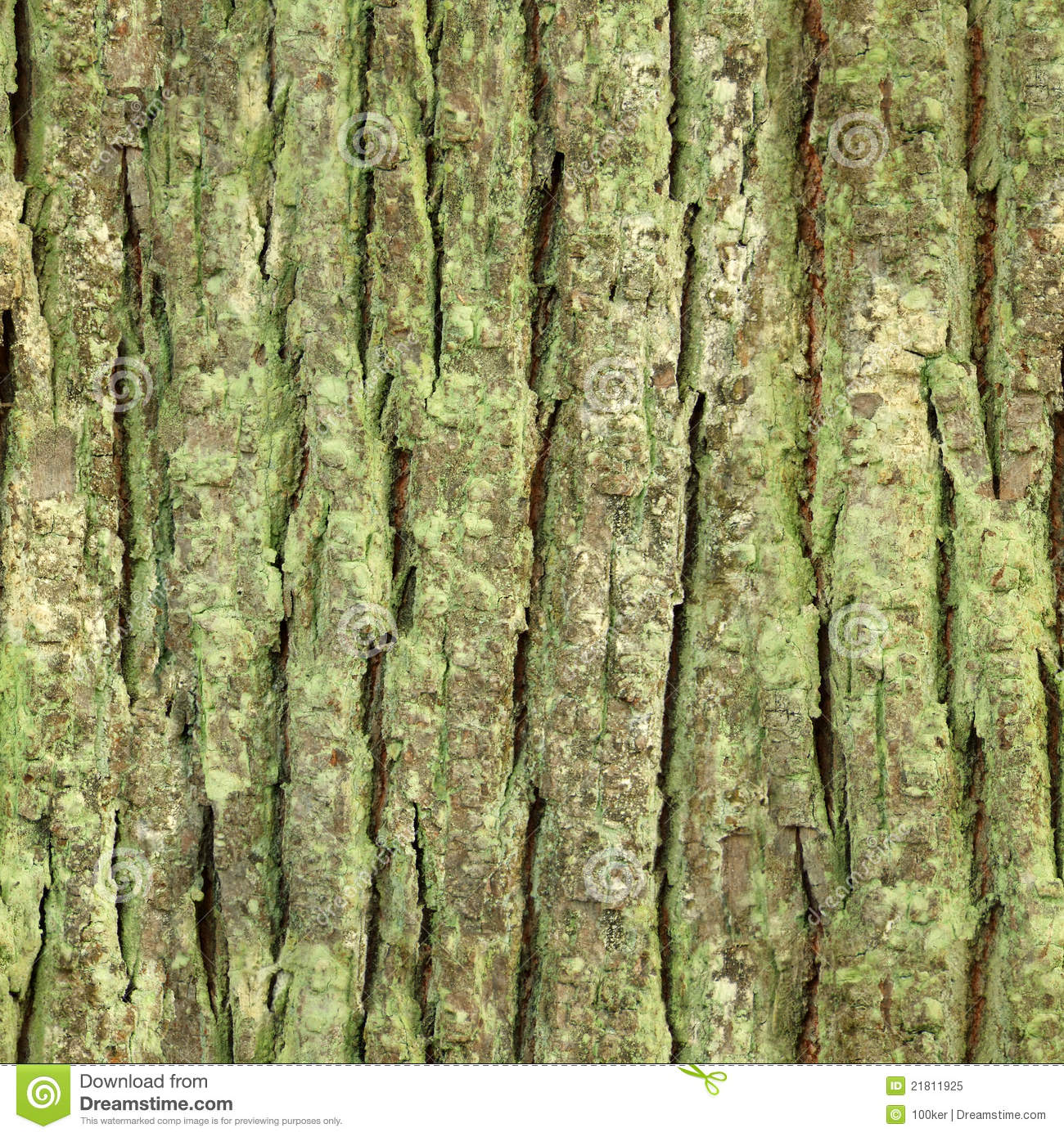 Seamless tree bark, rind texture