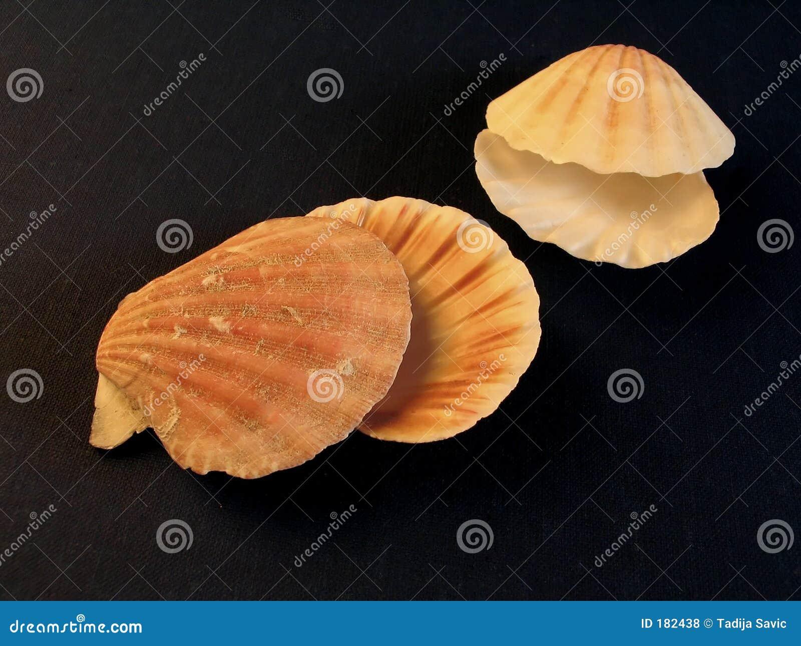 Seasheels