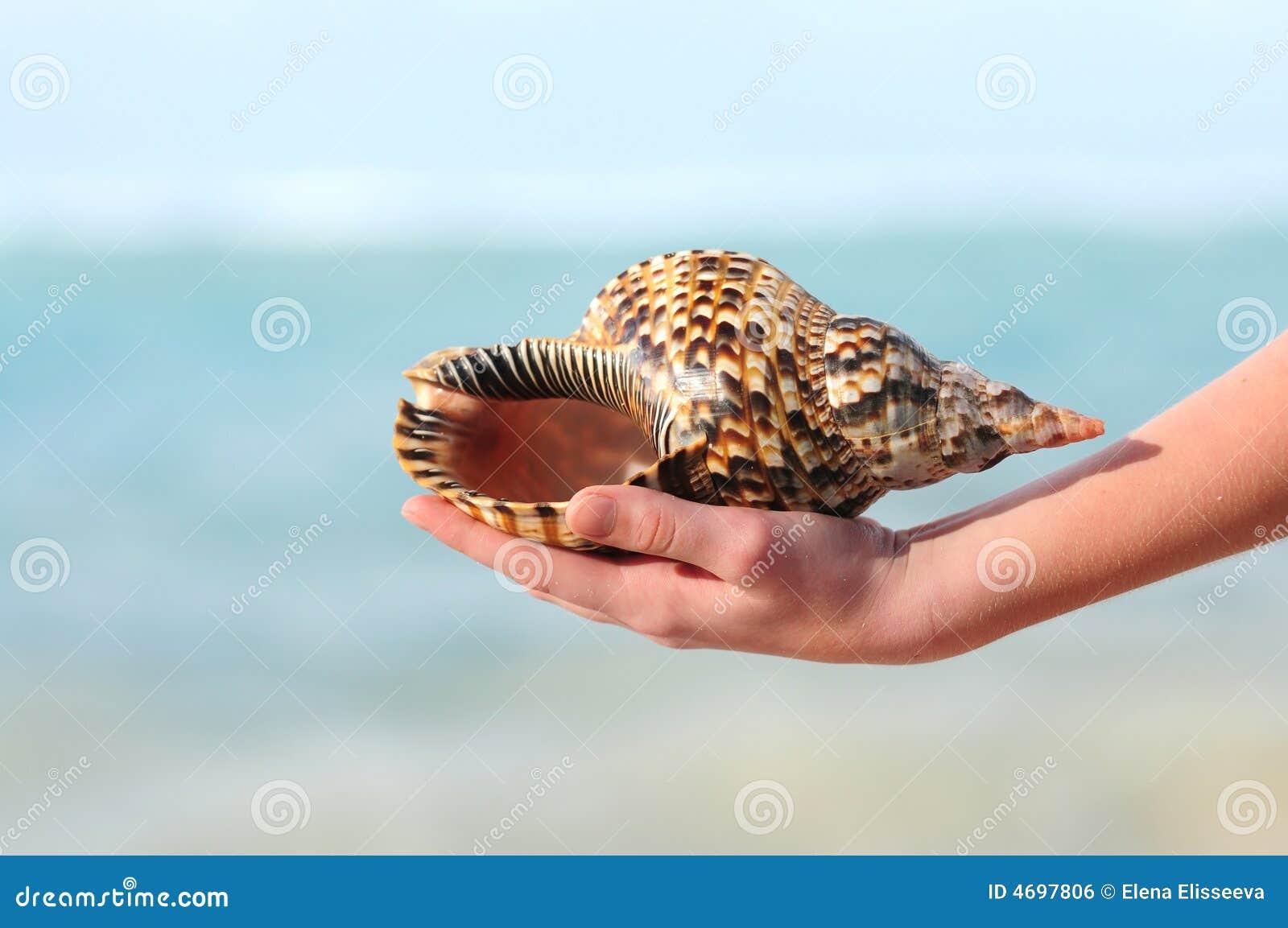 Seashell à disposition
