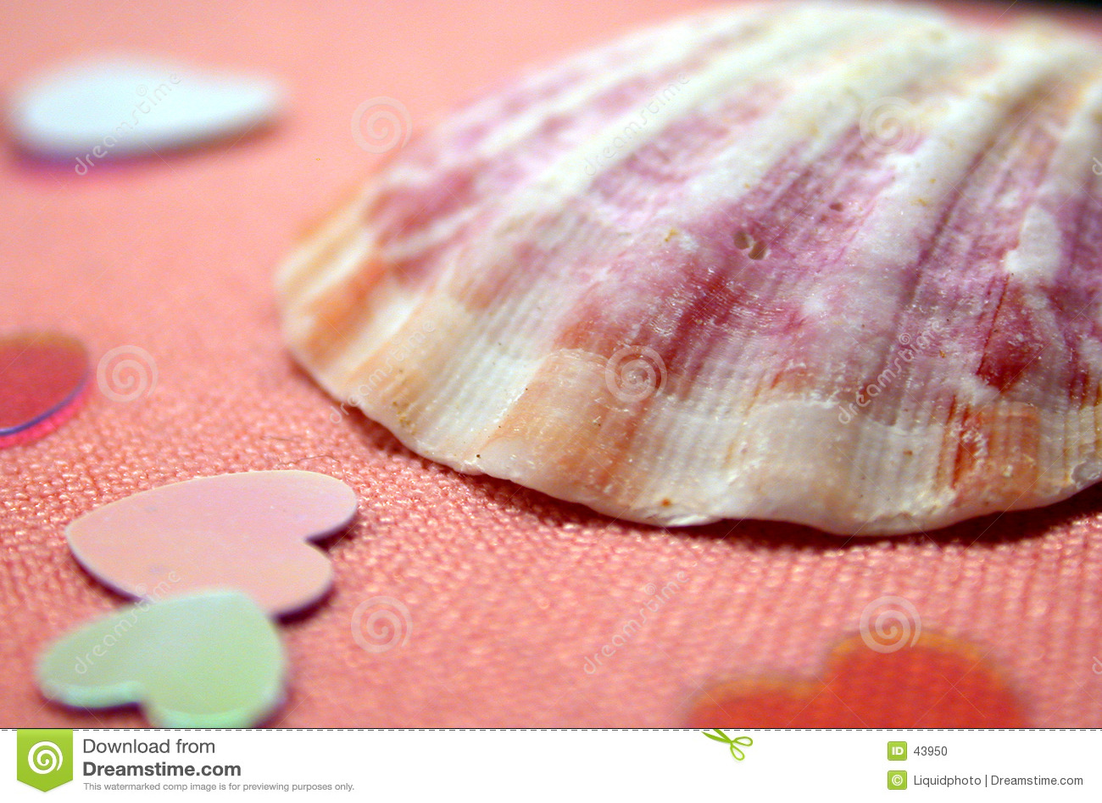Seashell сердец