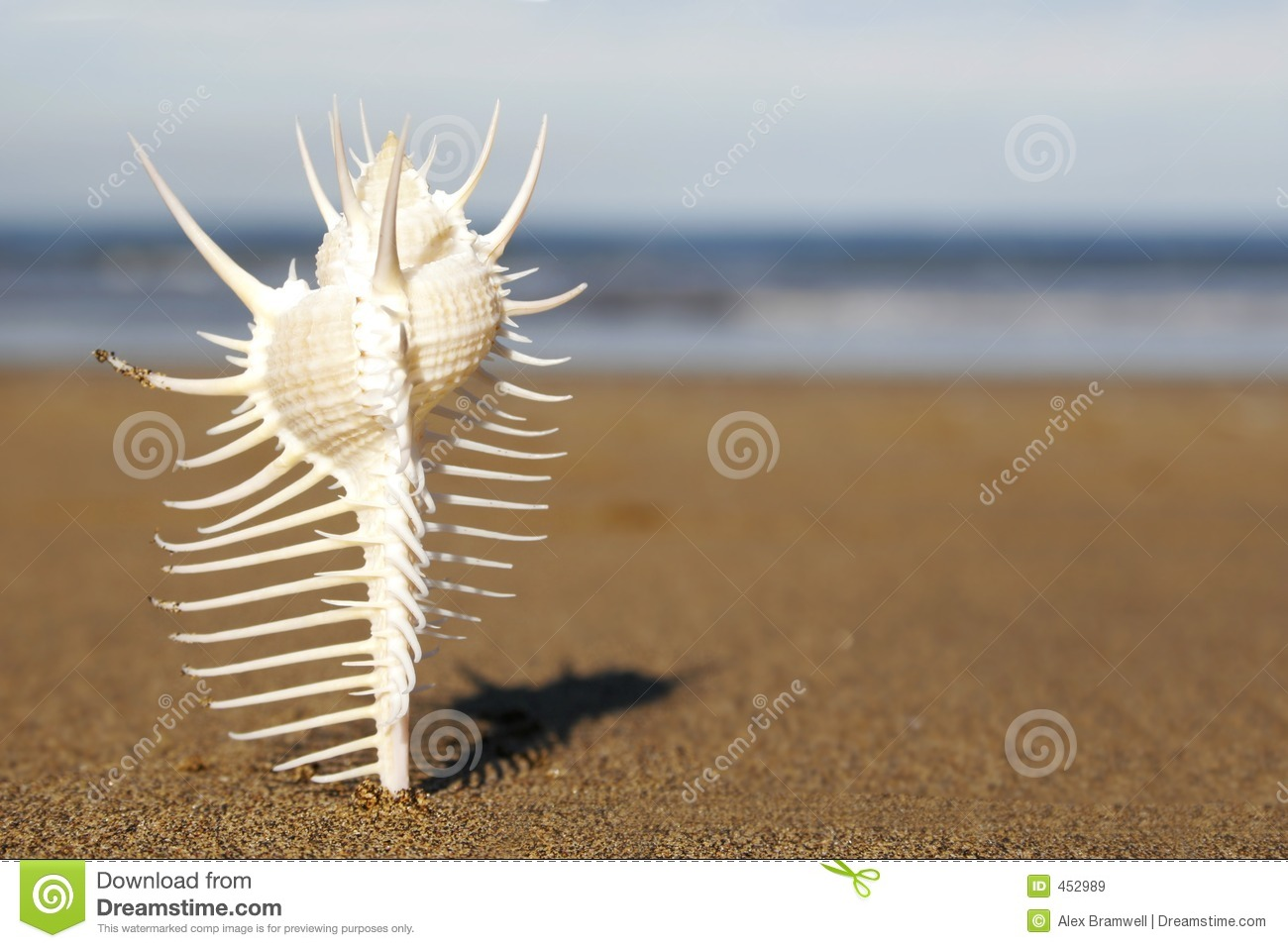 Download Seashell stock image. Image of shell, travel, discover - 452989