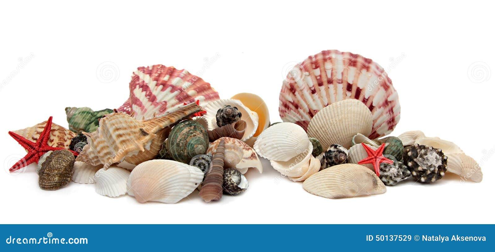 Seashell aislado en el fondo blanco