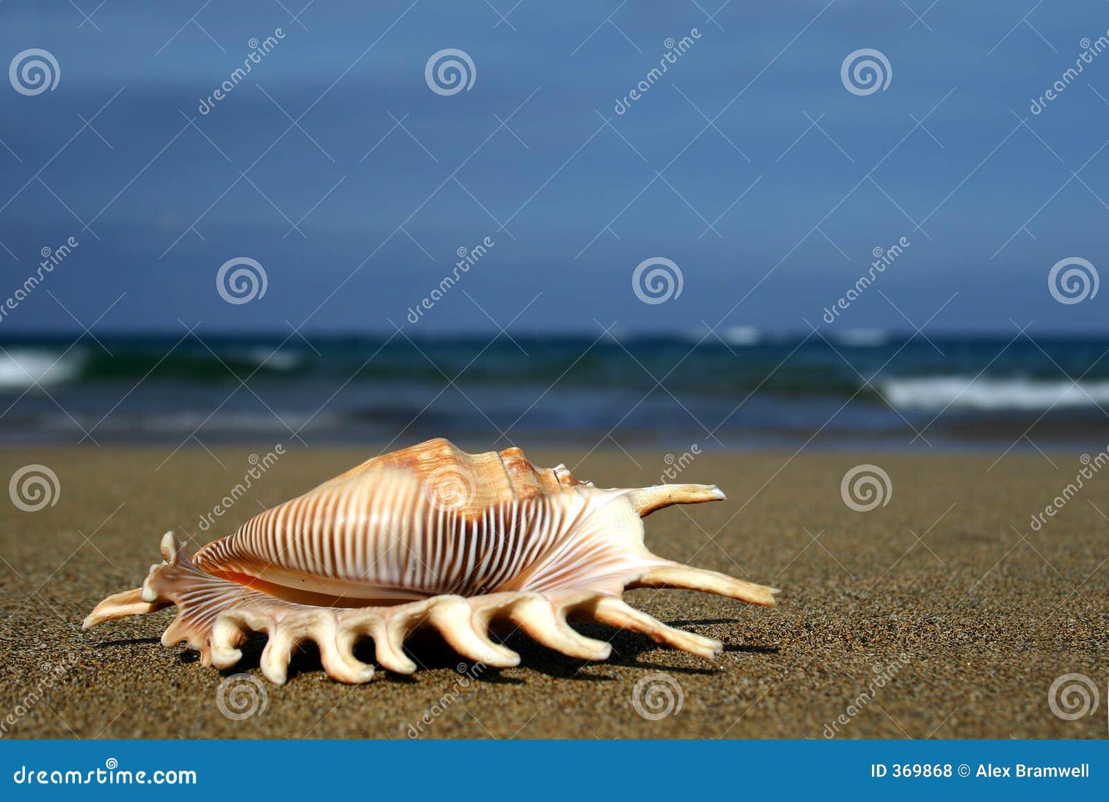 Seashell auf Ufer