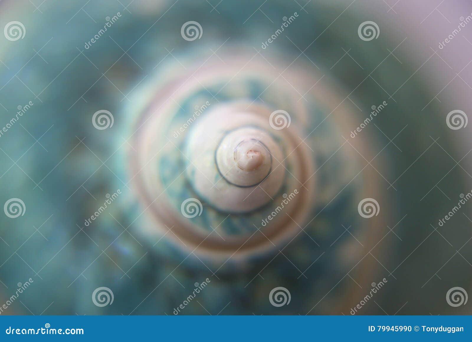 Seashell bleu