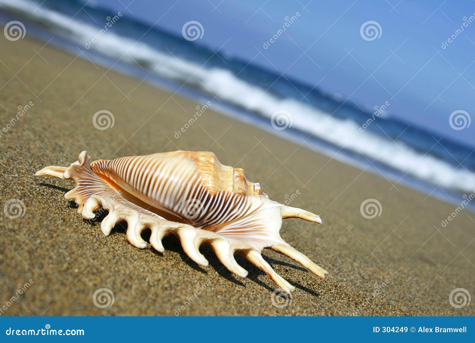 Seashell brzegu