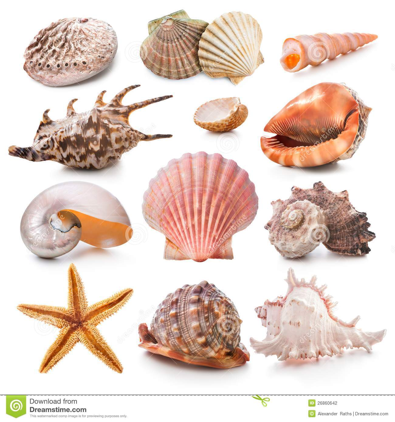 Seashell Collection Stock Photography - Image: 26860642