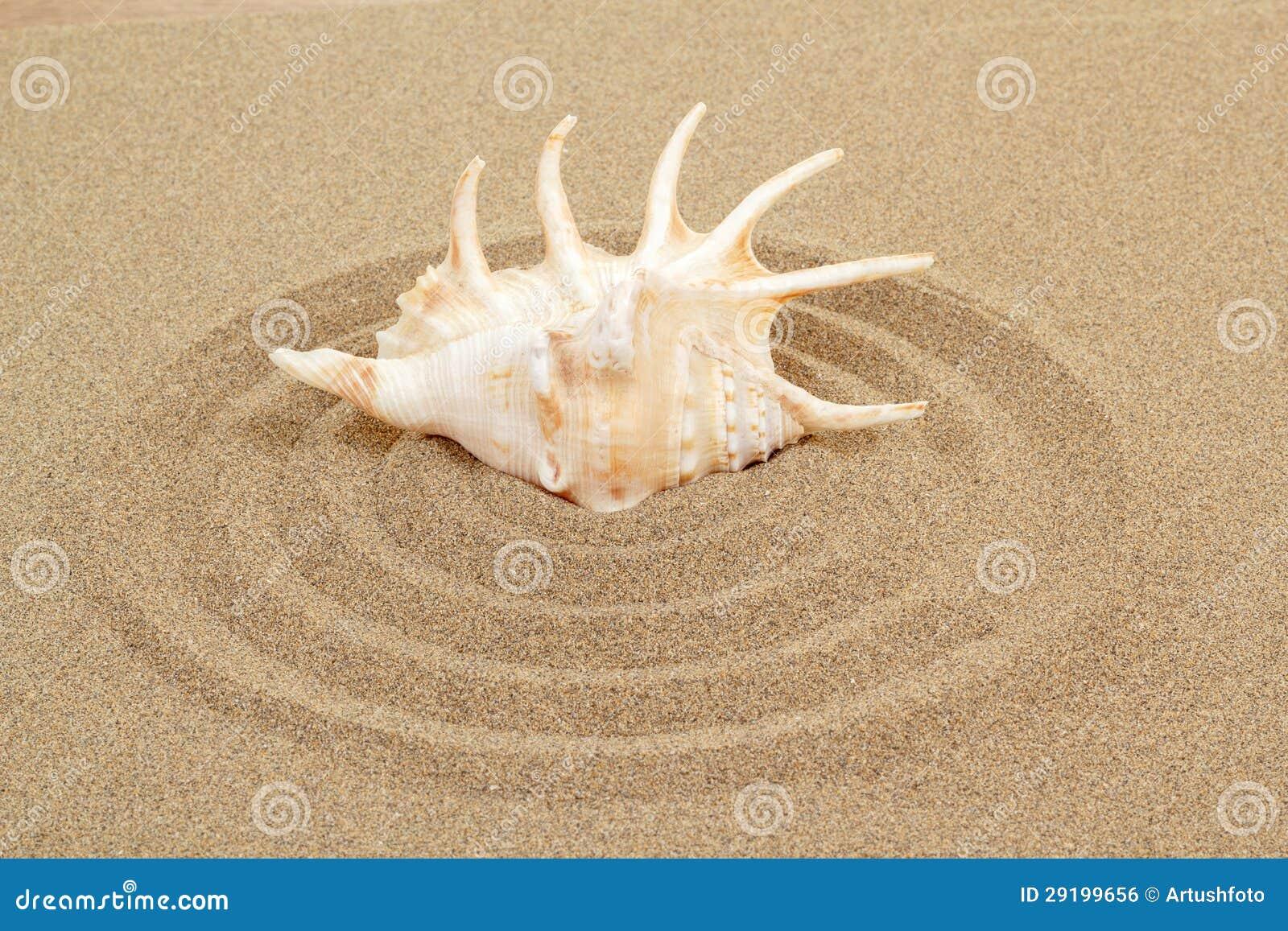 Seashell con la arena como fondo