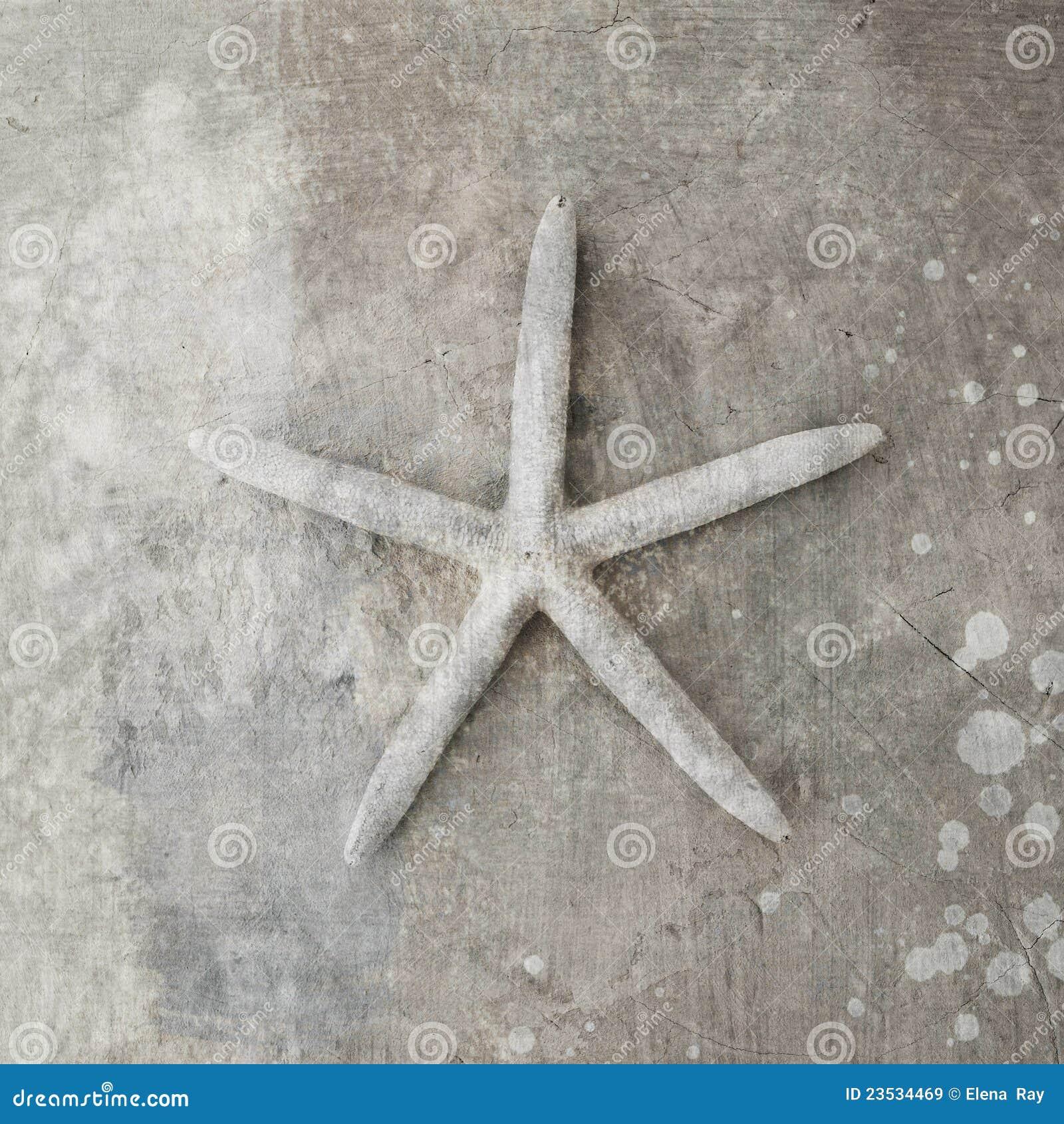 Seashell d étoiles de mer