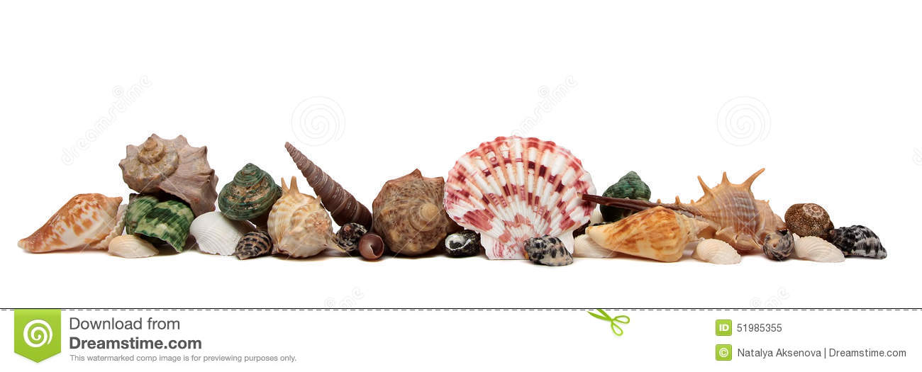 Seashell d isolement sur le fond blanc