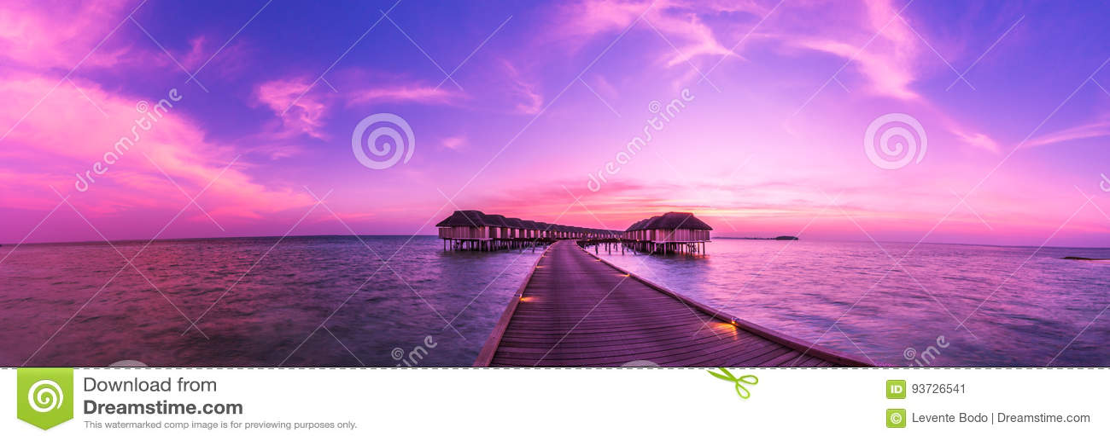 Seashell de la concha de peregrino en color de rosa Paisaje hermoso de la playa Escena tropical de la naturaleza Palmeras y cielo