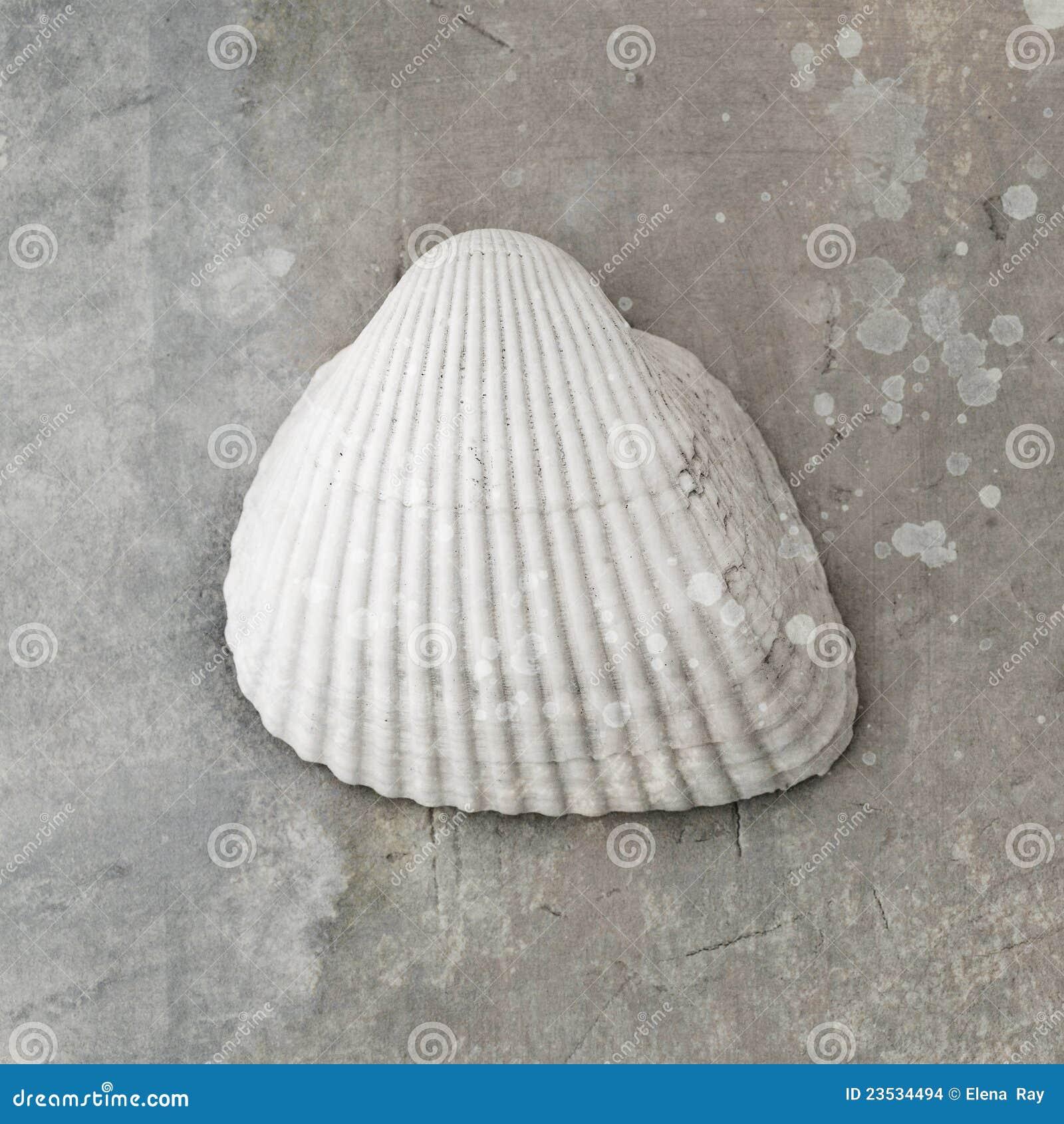 Seashell de palourde