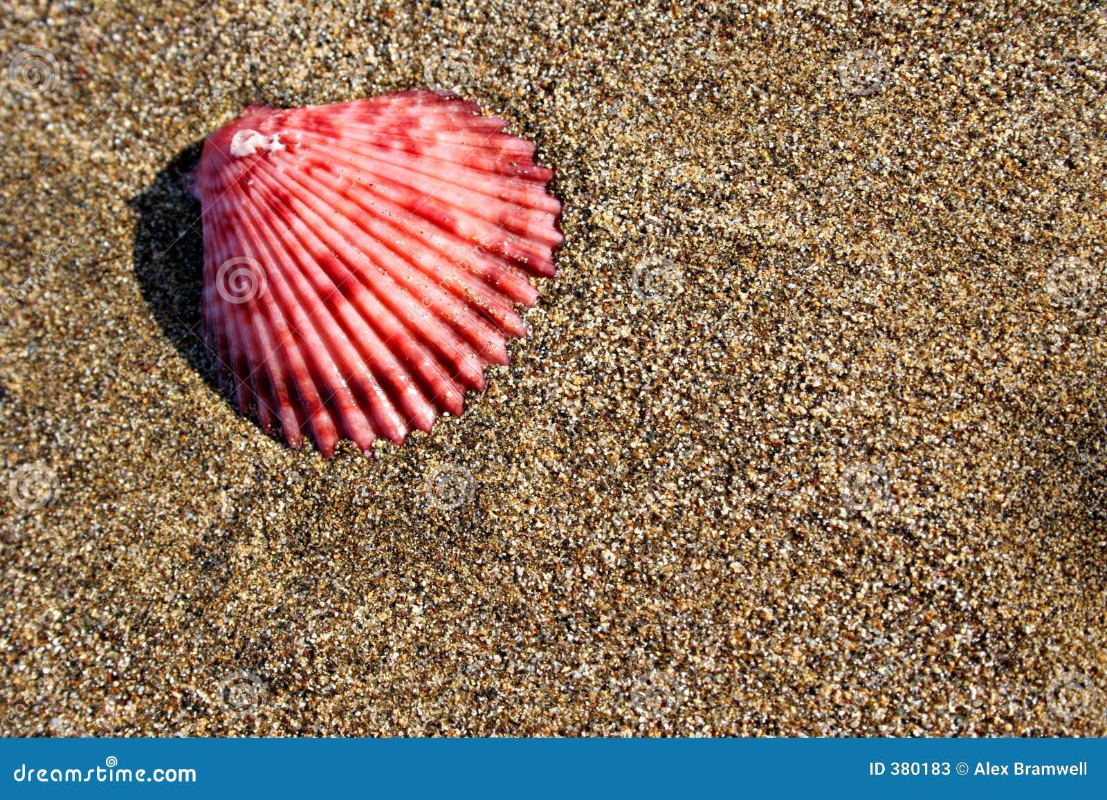 Seashell de plage