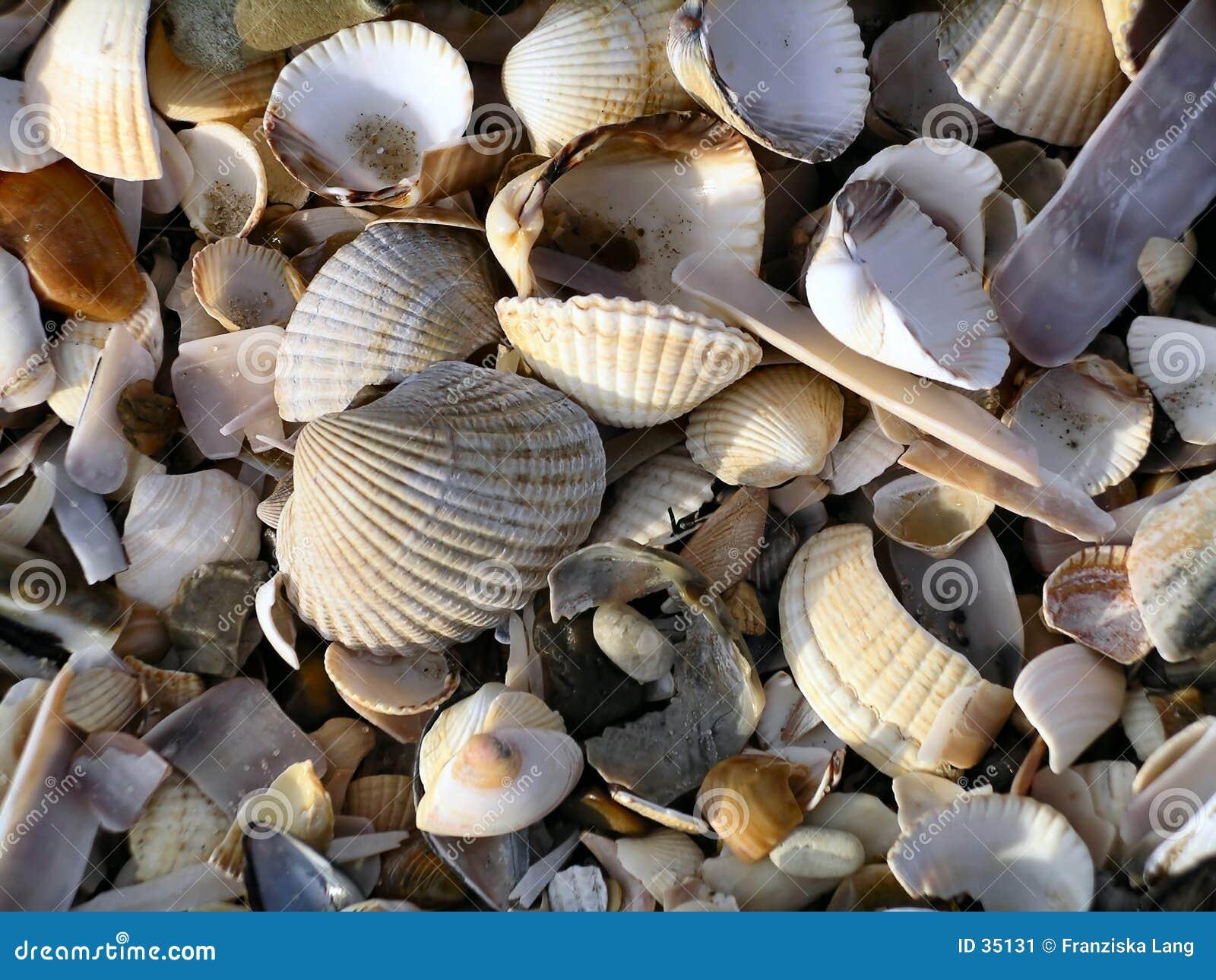Seashell-Durcheinander I (Farbe)