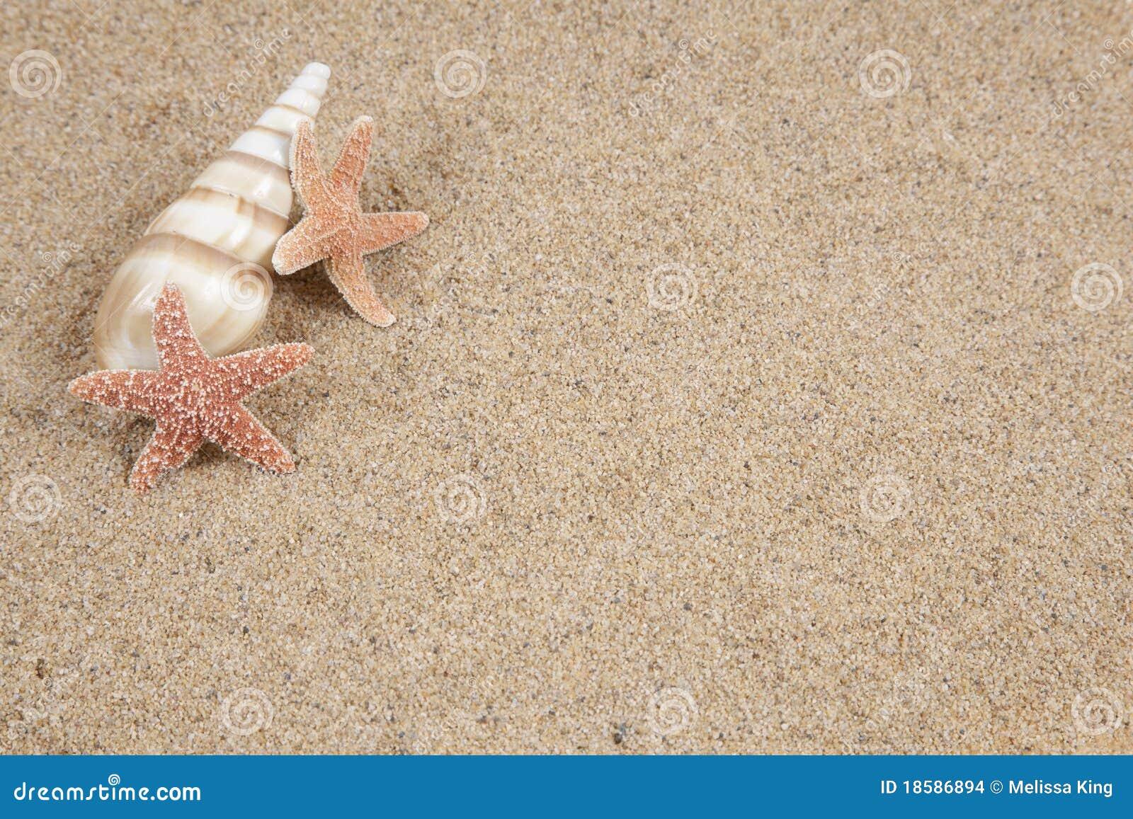 Seashell e stelle marine