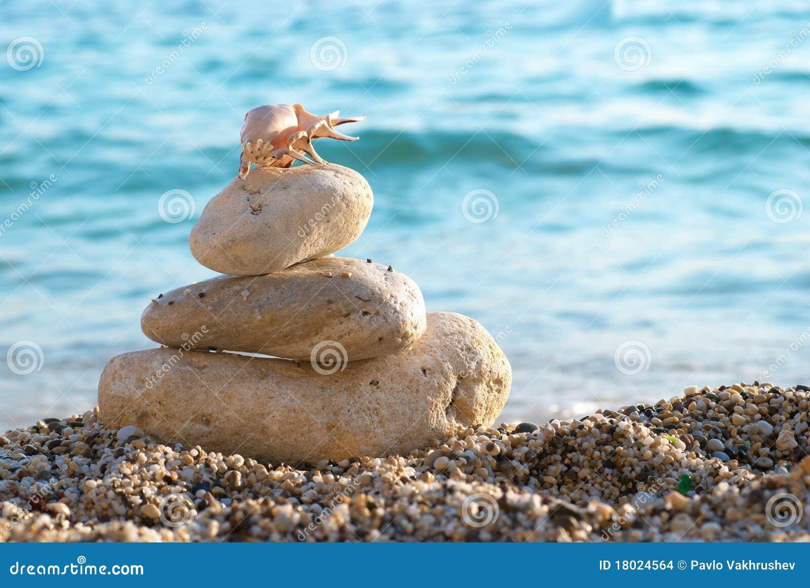 Seashell en la playa