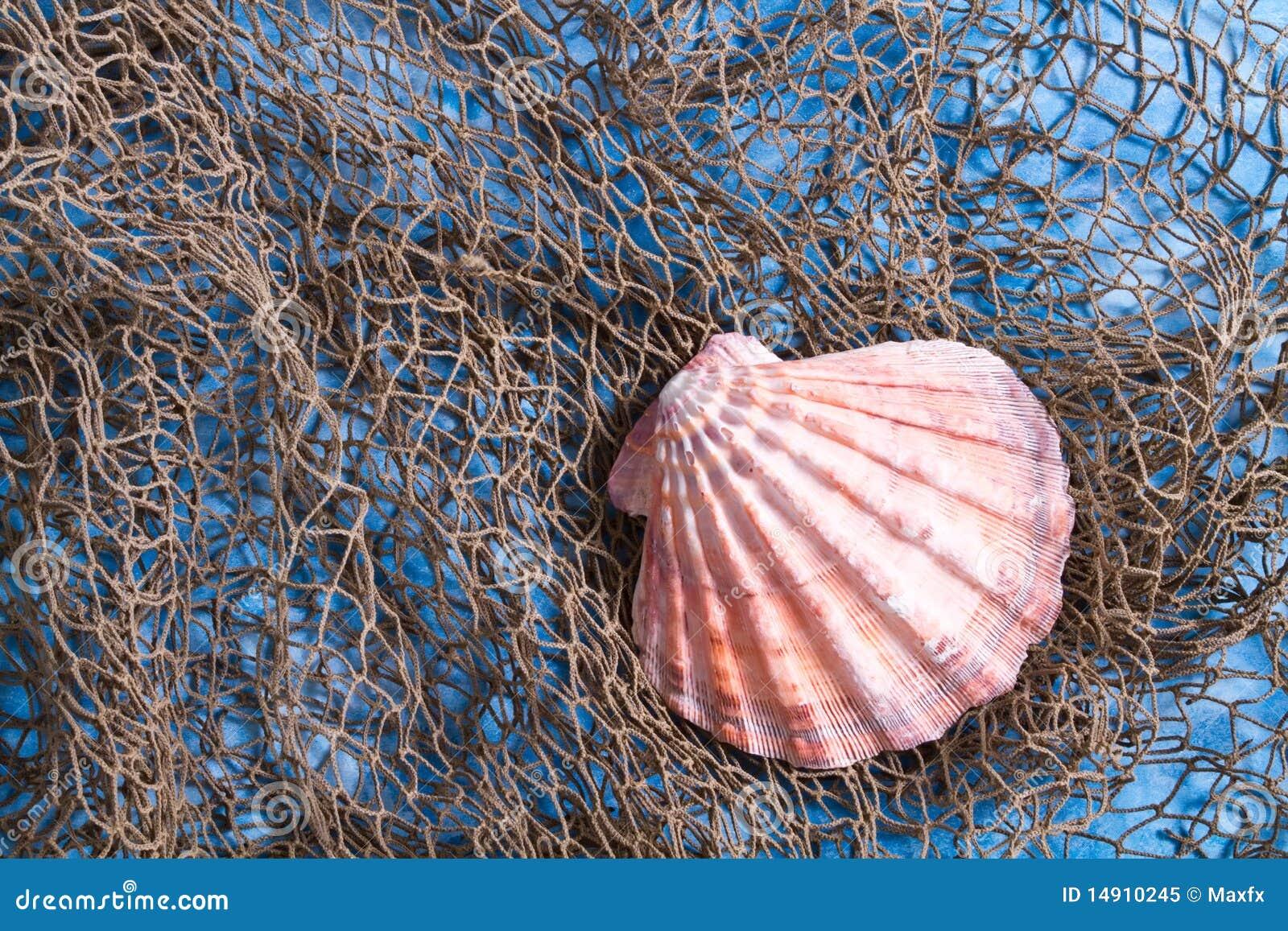 Seashell en red de pesca