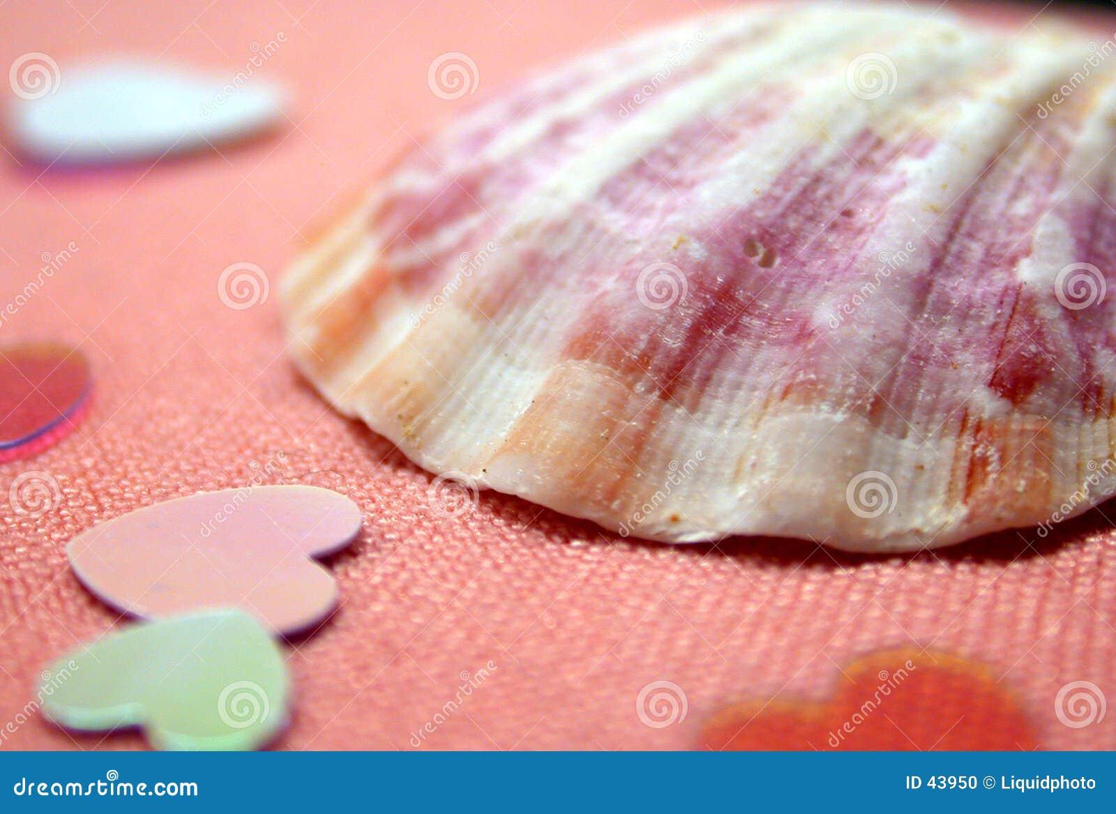 Seashell et coeurs