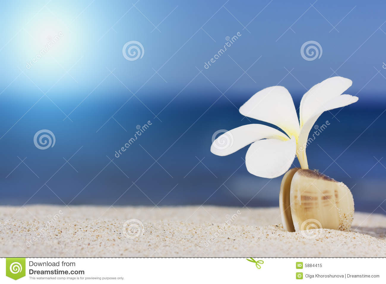 Seashell and flower on the beach