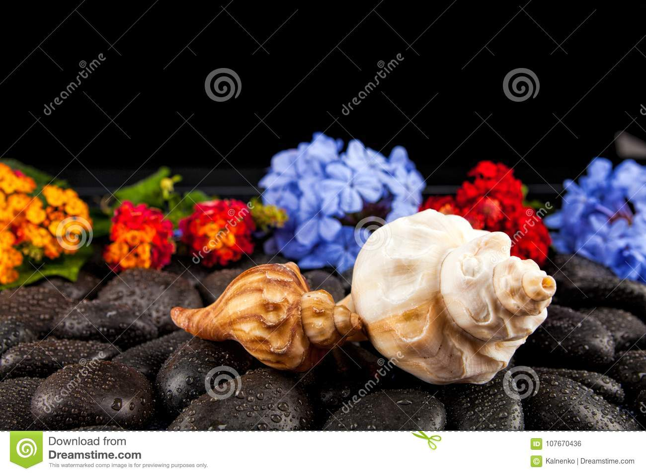 Seashell And Flowers On Black Stone Suitable For Background Stock
