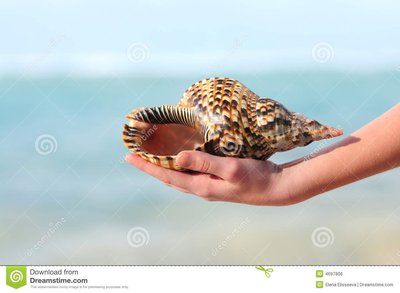 Seashell in hand