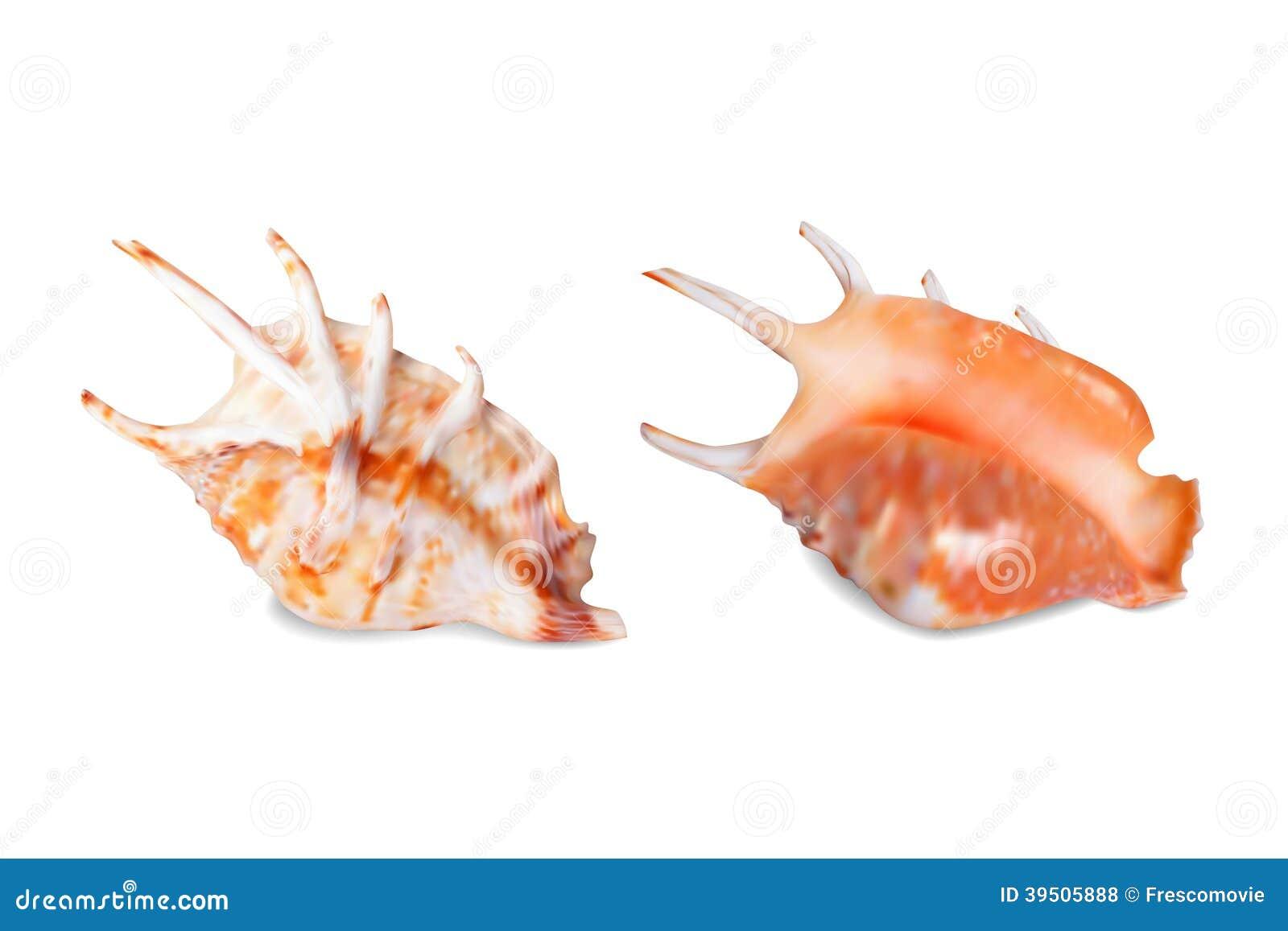 Seashell, isolated on white