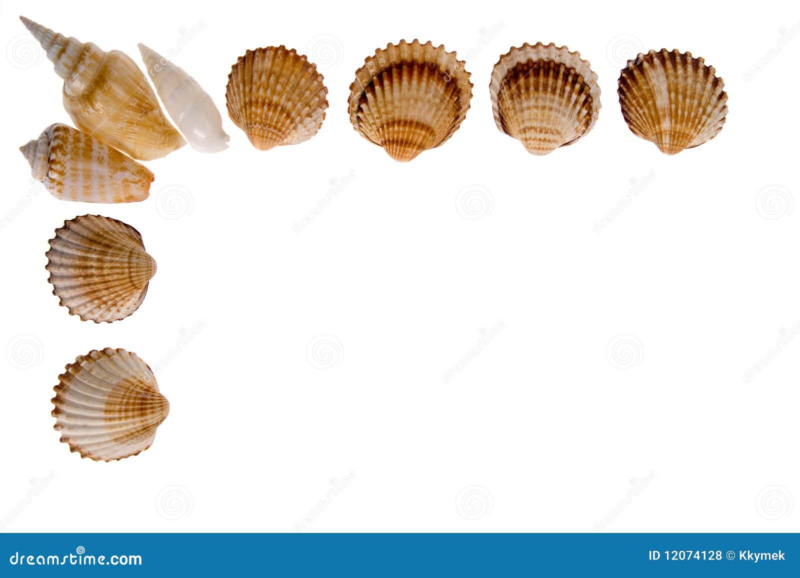 Seashell - marco en blanco foto de archivo. Imagen de cubo - 12074128
