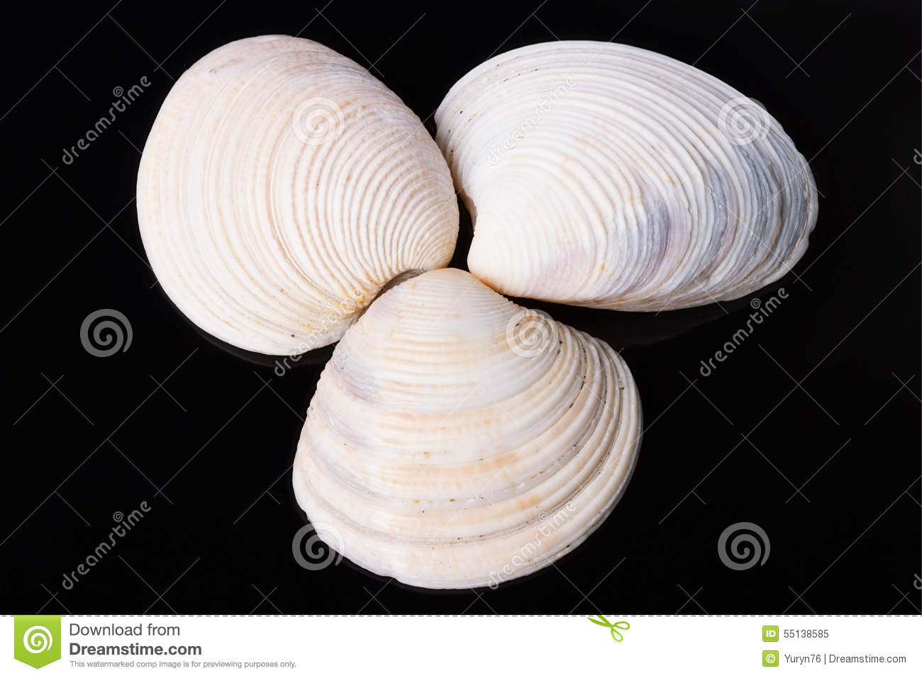 mollusk black singles Matchcom, the leading online dating resource for singles search through thousands of personals and photos go ahead, it's free to look.