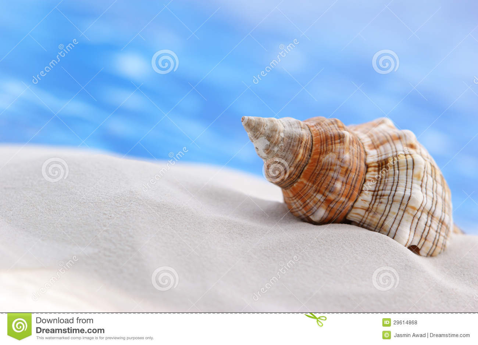 Seashell na praia