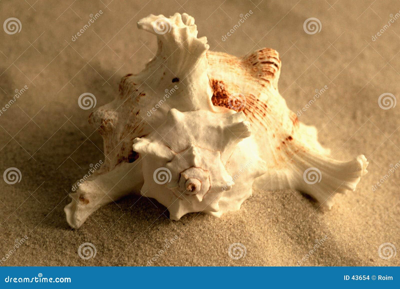 Seashell piasku.