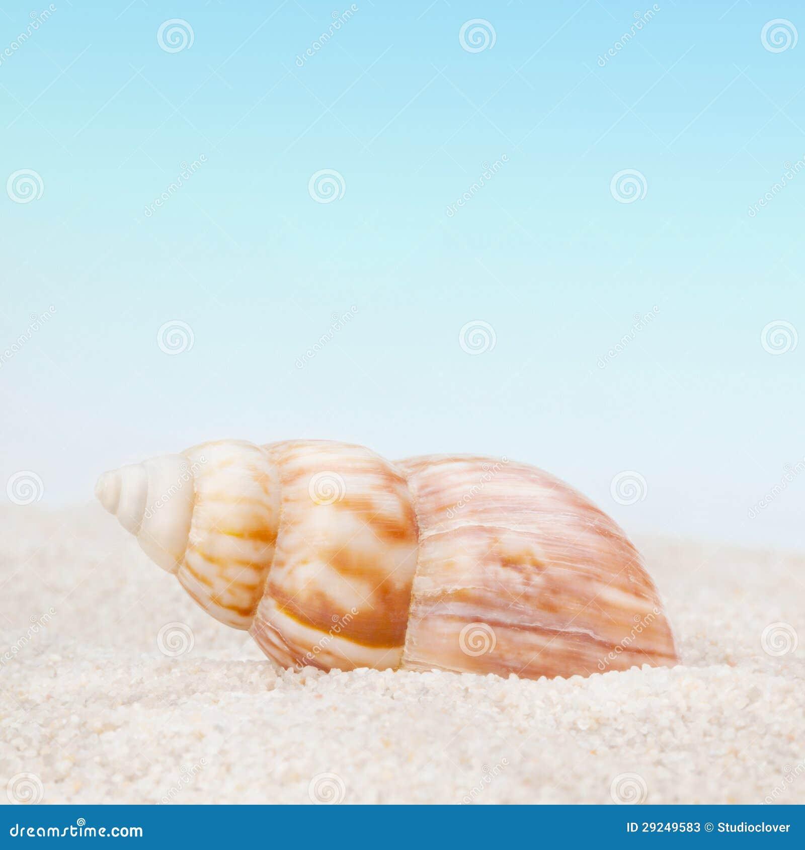 Download Seashell Puro No Sandy Beach Imagem de Stock - Imagem de marisco, outdoor: 29249583