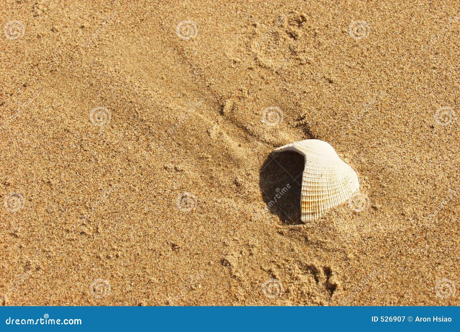 Seashell resistido na areia
