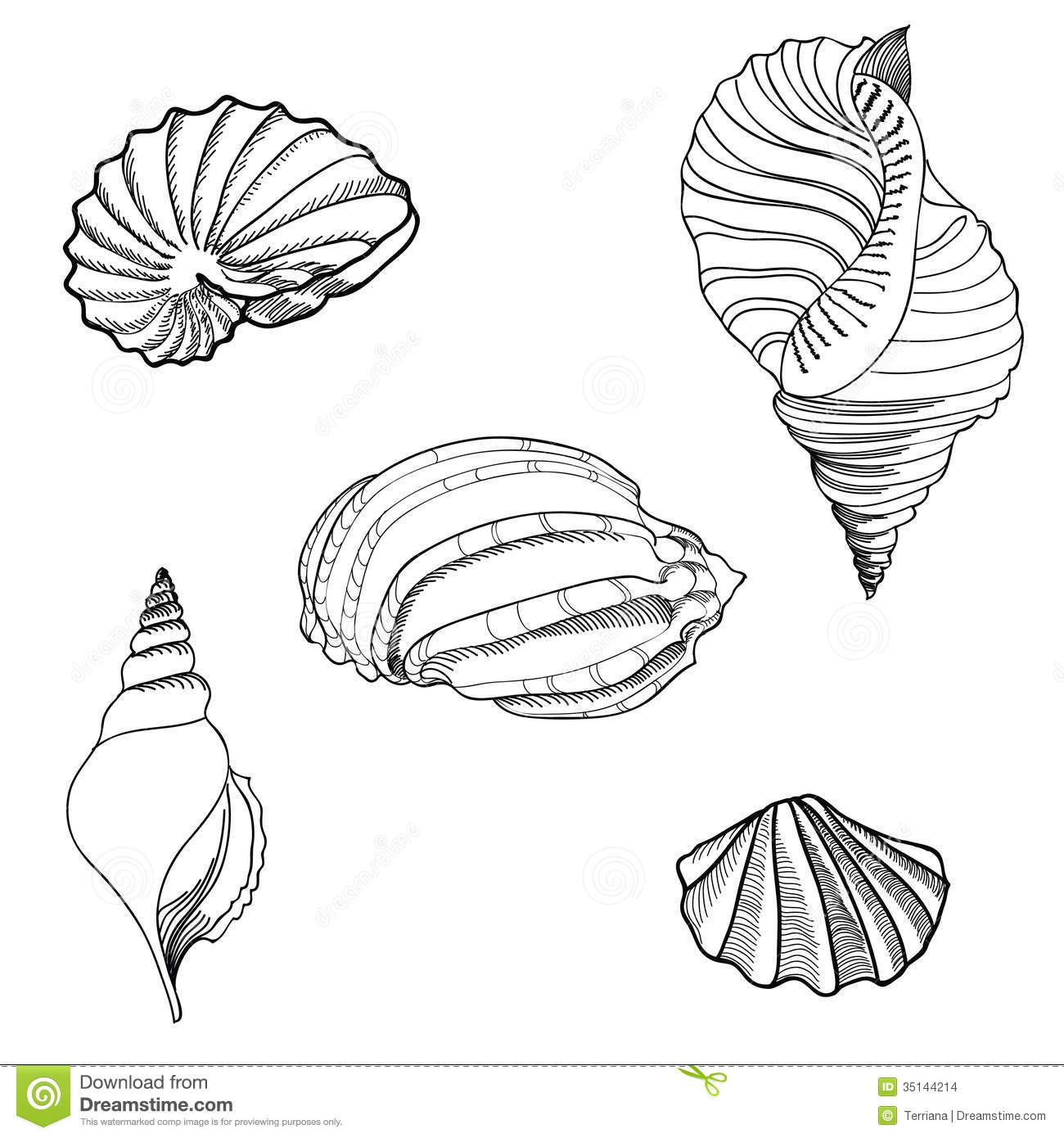 sand dollar coloring page image information