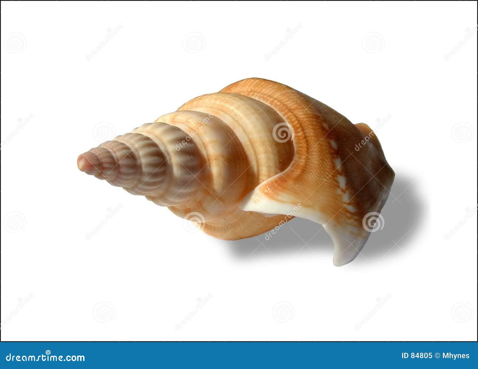 Seashell spiralé