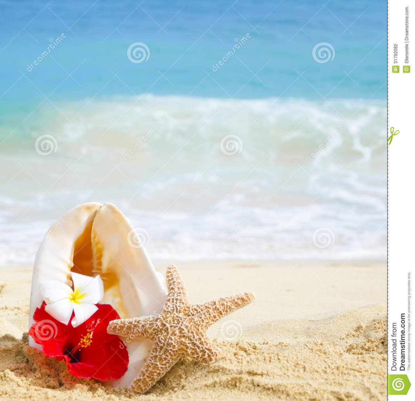 e2770ed53bb37b Seashell And Starfish With Tropical Flowers On Sandy Beach Stock ...