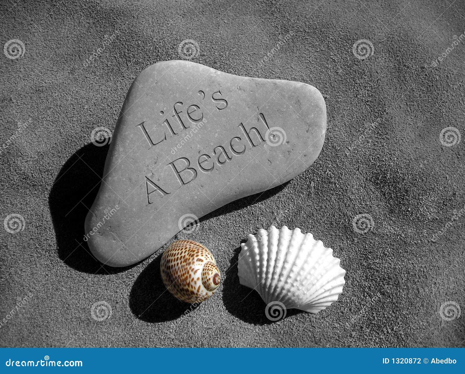 Seashell Stone Life s a Beach