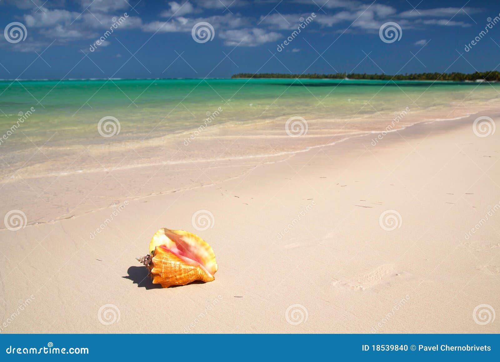 Seashell sur la mer des Caraïbes