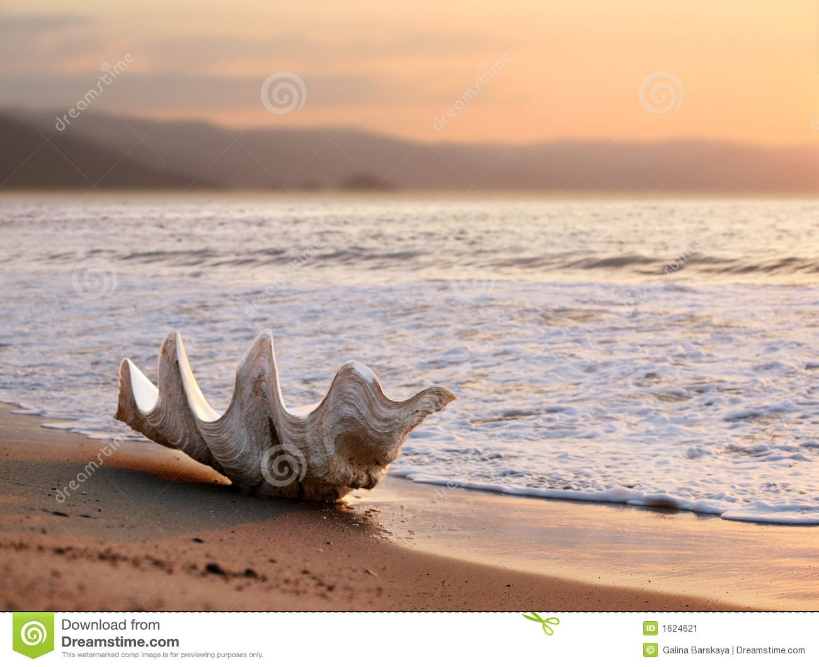 Seashell sur la plage
